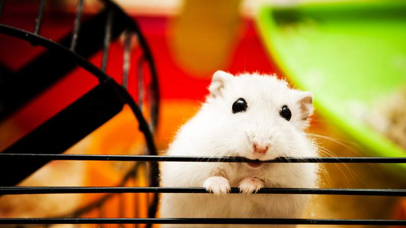 Of-Course-That's-Your-Hamster