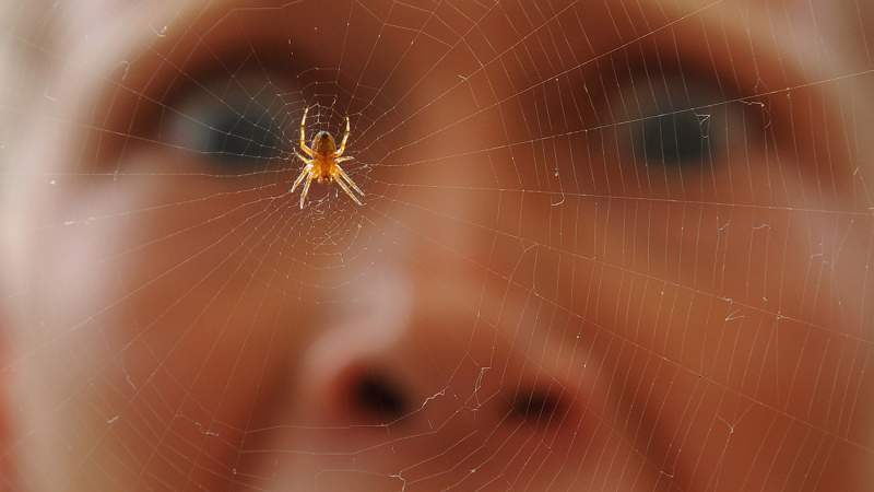 That-Spider-Is-More-Afraid-of-Us-Than-We-Are-of-It