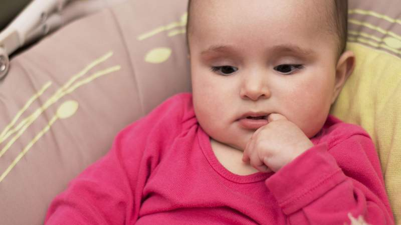 Krystyna Taran / Shutterstock.com