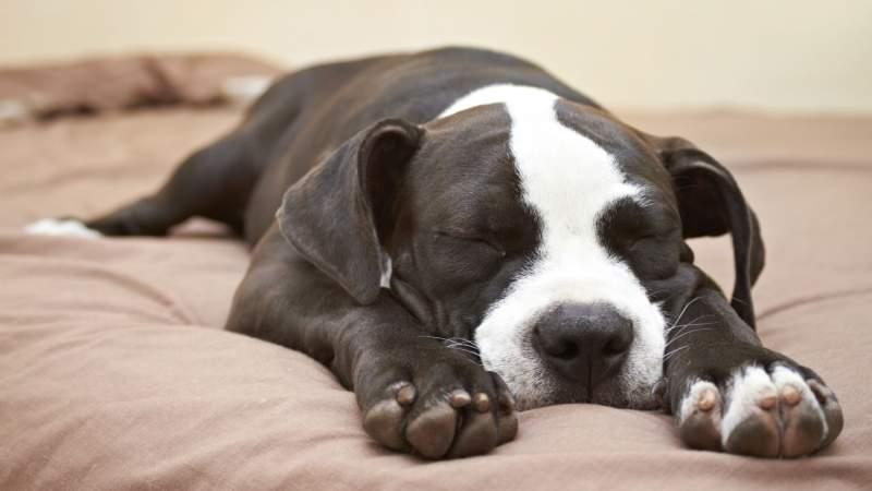 dogboxstudio / Shutterstock.com