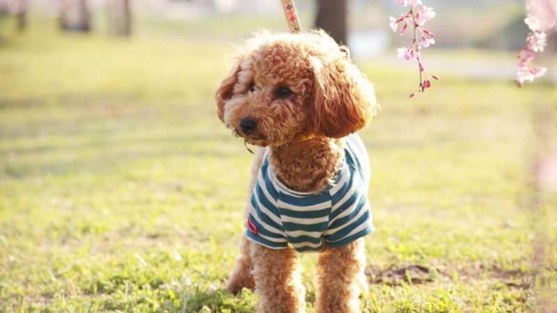 KPG Payless / Shutterstock.com