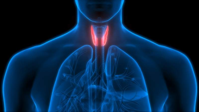 Thyroid Cancer: The Symptoms, Causes and Treatments