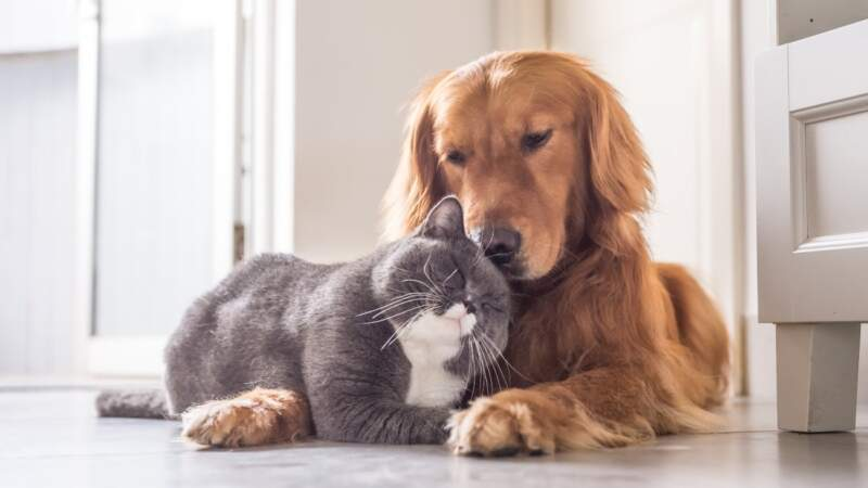 Health Benefits From Adopting a Pet